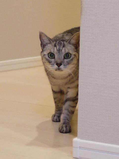 猫のお留守番 ももちゃん編。_a0143140_23495875.jpg