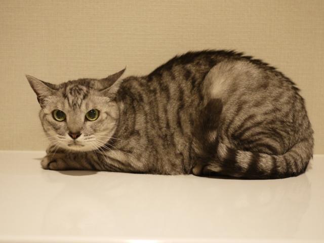 猫のお留守番 ももちゃん編。_a0143140_23525006.jpg