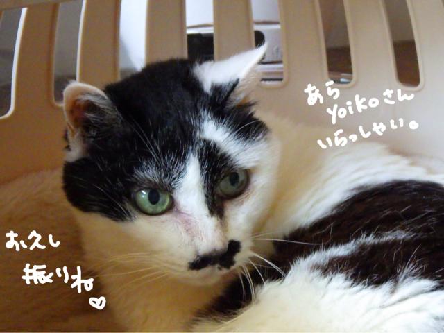yoikoさんが遊びに来てくれました。_b0223446_16480952.jpg