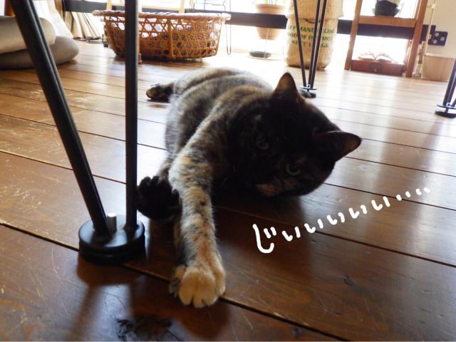 yoikoさんが遊びに来てくれました。_b0223446_16481332.jpg