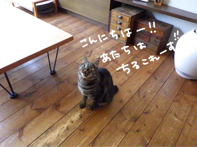 yoikoさんが遊びに来てくれました。_b0223446_16491156.jpg