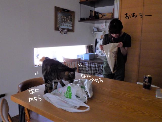 yoikoさんが遊びに来てくれました。_b0223446_16491440.jpg