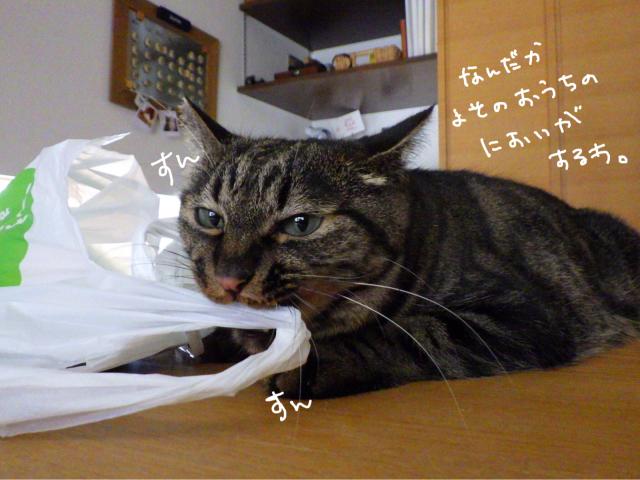 yoikoさんが遊びに来てくれました。_b0223446_16501534.jpg