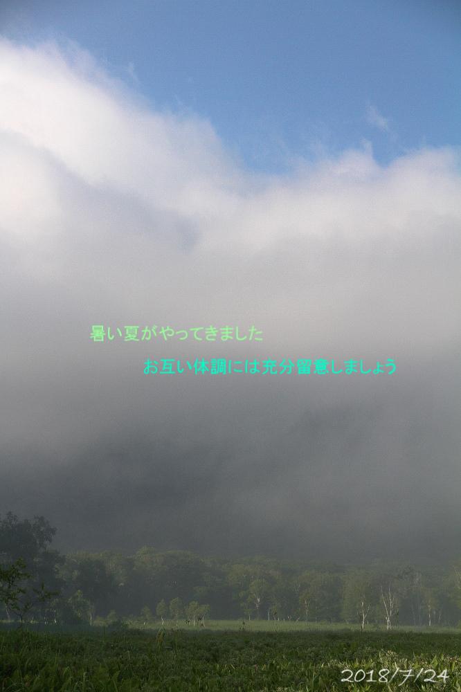 夏になると思い出す、尾瀬_e0310446_09550863.jpg