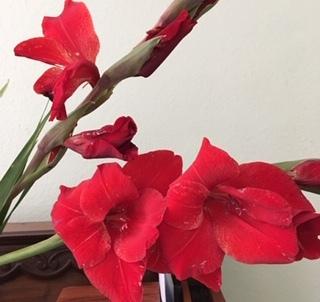 最近の花たちーグラジオラス、ダリア、トルコ桔梗などなど_e0350971_07294975.jpg