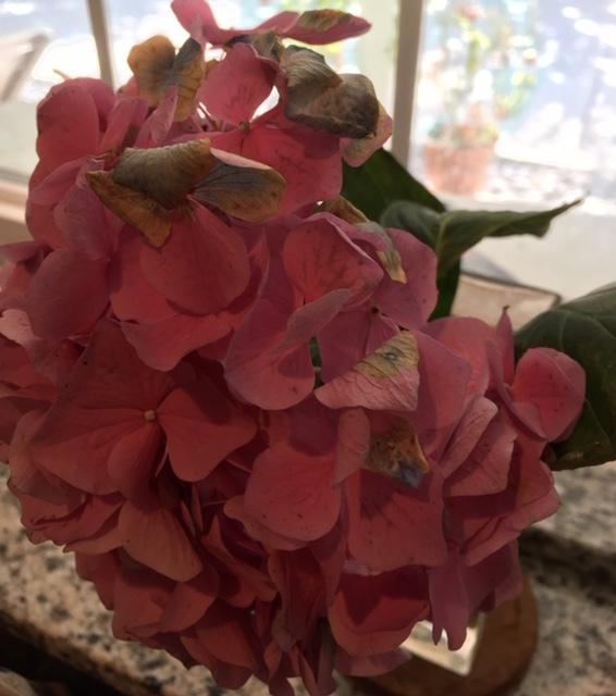最近の花たちーグラジオラス、ダリア、トルコ桔梗などなど_e0350971_07322107.jpg