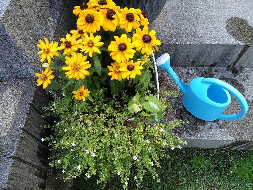 夏の花。_f0098671_12402543.jpg