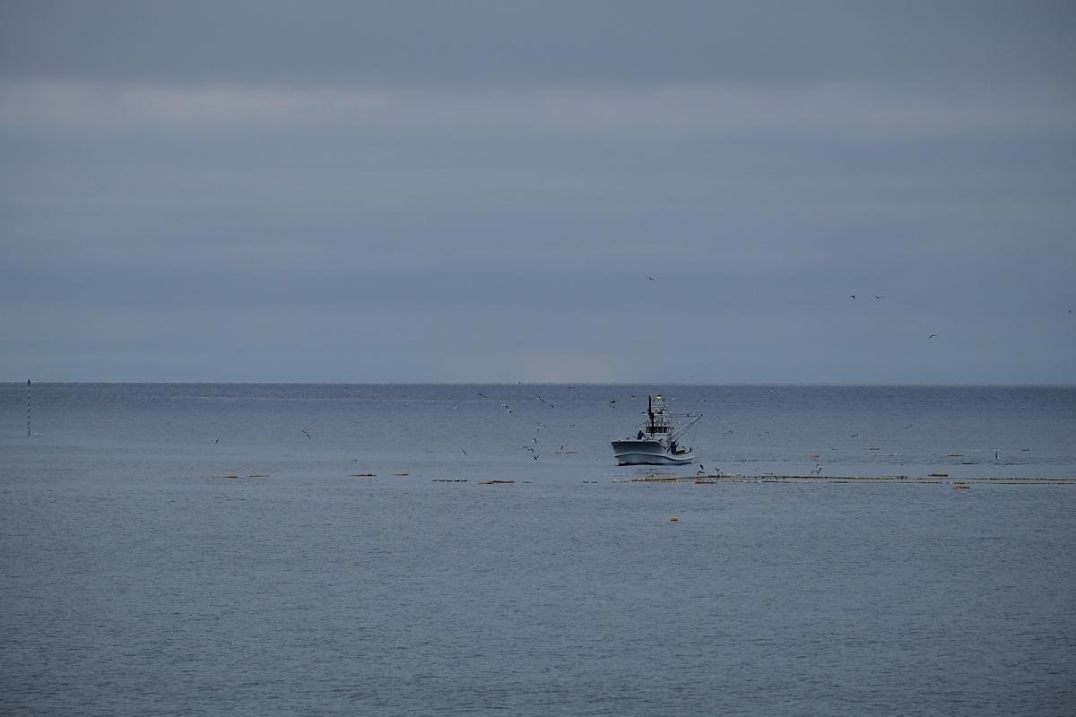 潮の香りがする朝の青い空気を吸いに来ました。_e0051186_09574014.jpg