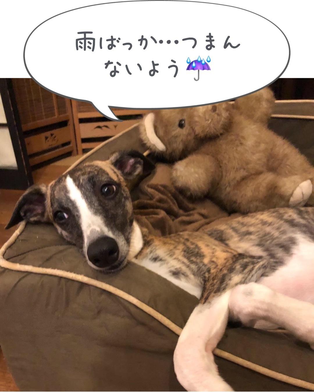 やっと梅雨明け〜_f0177788_23532945.jpeg