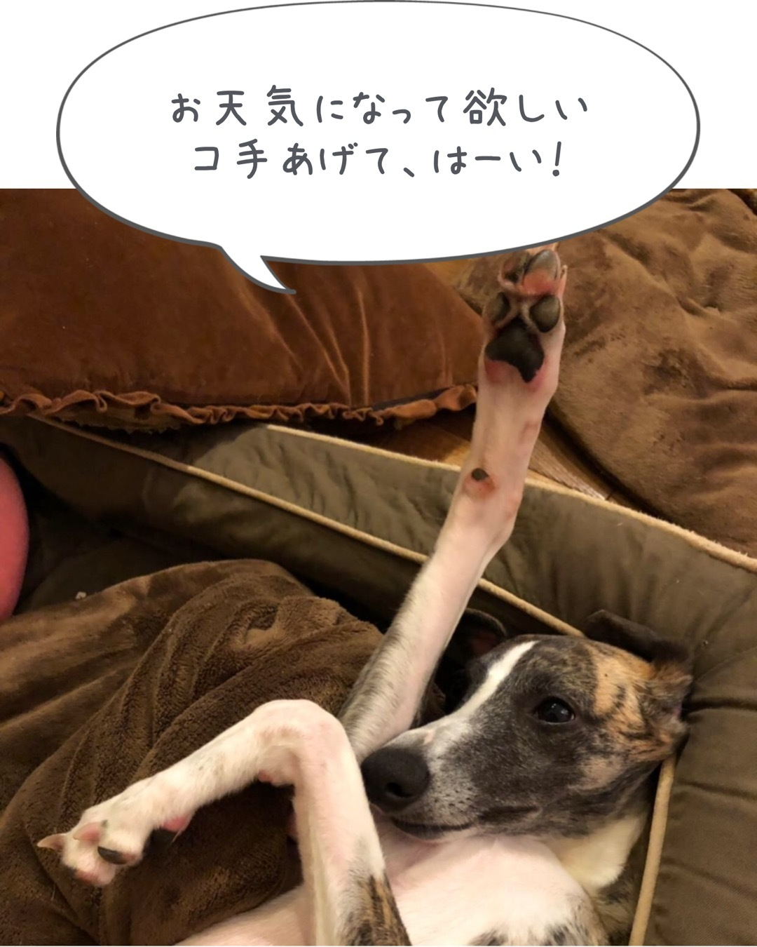 やっと梅雨明け〜_f0177788_23540583.jpeg