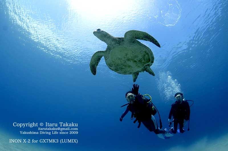 青すぎる海にアオウミガメ!_b0186442_12411452.jpg