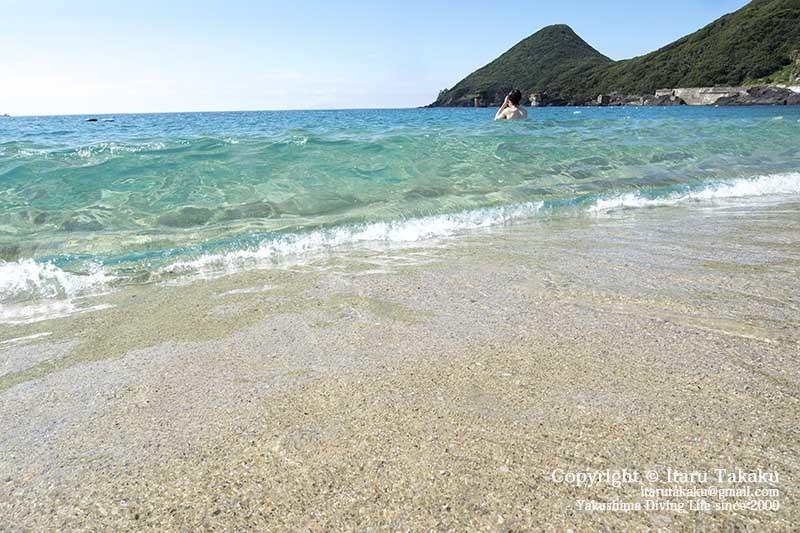 青すぎる海にアオウミガメ!_b0186442_12411468.jpg