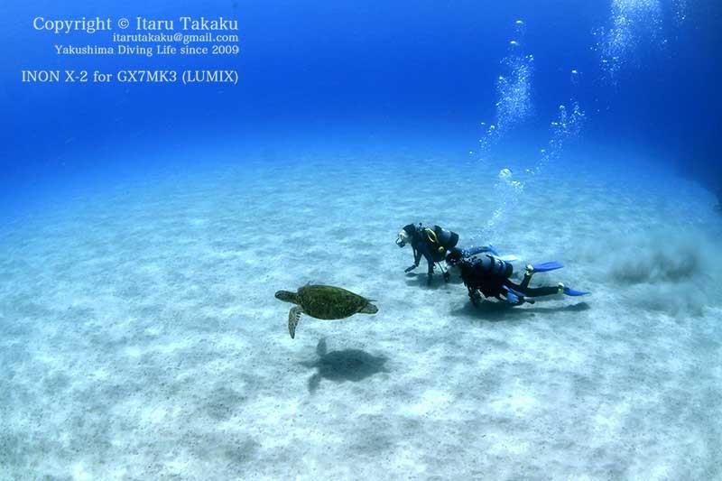 青すぎる海にアオウミガメ!_b0186442_12411489.jpg