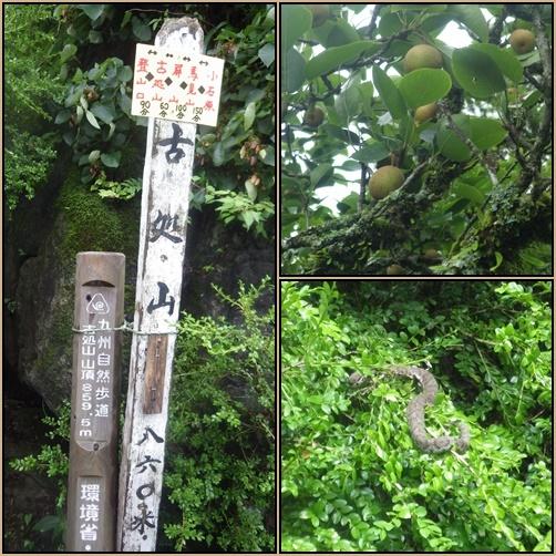古処山へギンバイソウ他_e0164643_14072601.jpg