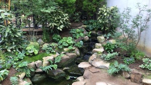 奇跡の星の植物園 その2_c0335145_08515879.jpeg