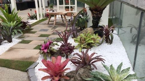 奇跡の星の植物園 その2_c0335145_08542805.jpeg