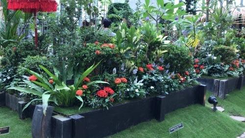 奇跡の星の植物園 その2_c0335145_08595654.jpeg