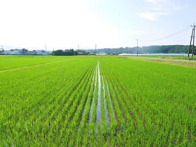 七城米 長尾農園 令和元年度も美しすぎる田んぼで元気に成長中!!現在販売中の『七城米』は残りわずか!!_a0254656_18544943.jpg