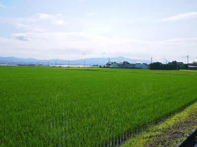 七城米 長尾農園 令和元年度も美しすぎる田んぼで元気に成長中!!現在販売中の『七城米』は残りわずか!!_a0254656_18570988.jpg