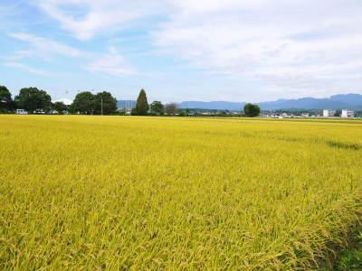 七城米 長尾農園 令和元年度も美しすぎる田んぼで元気に成長中!!現在販売中の『七城米』は残りわずか!!_a0254656_19061565.jpg