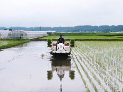 七城米 長尾農園 令和元年度も美しすぎる田んぼで元気に成長中!!現在販売中の『七城米』は残りわずか!!_a0254656_19093427.jpg