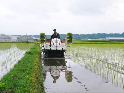 七城米 長尾農園 令和元年度も美しすぎる田んぼで元気に成長中!!現在販売中の『七城米』は残りわずか!!_a0254656_19114620.jpg