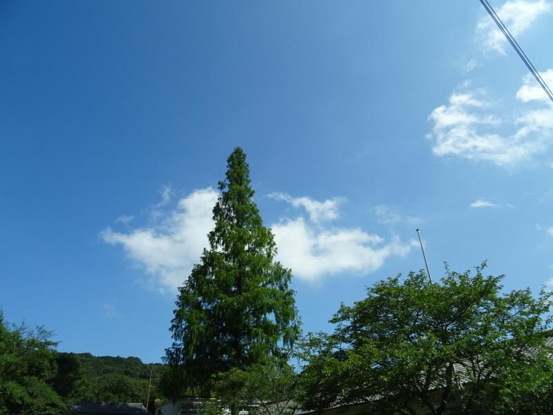 猛暑日は作業にならず・・・孝子の森_c0108460_17552706.jpg
