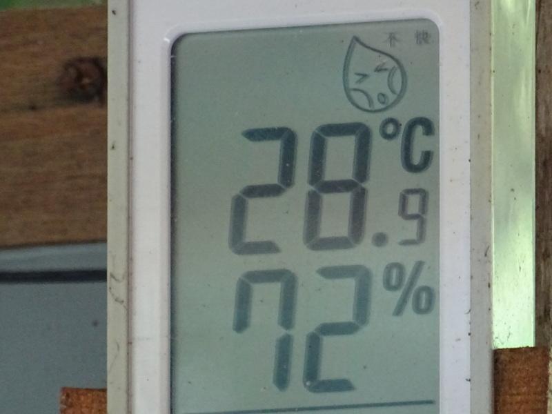 猛暑日は作業にならず・・・孝子の森_c0108460_17562478.jpg