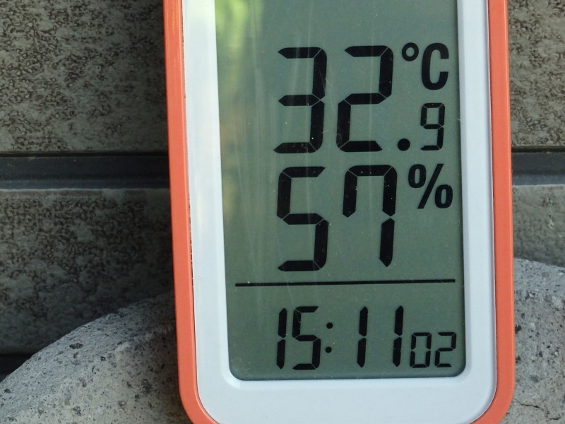 猛暑日は作業にならず・・・孝子の森_c0108460_18023567.jpg