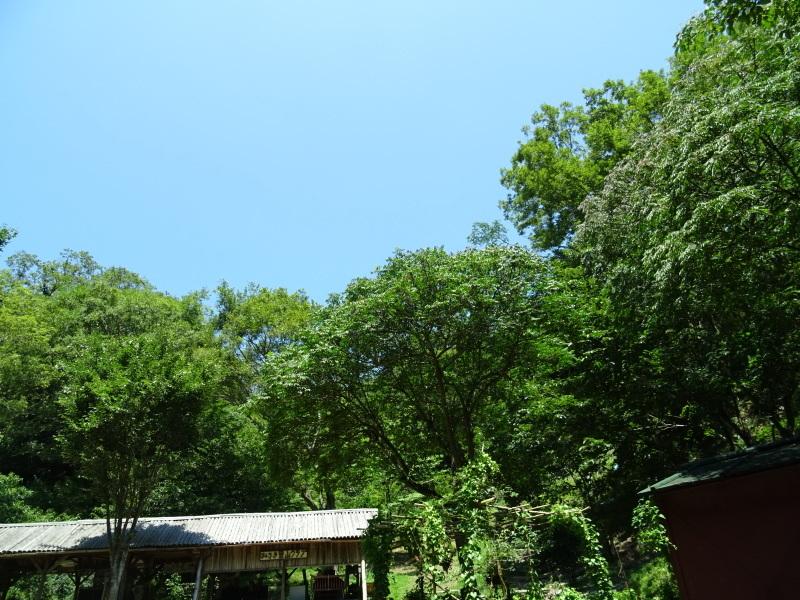 猛暑日は作業にならず・・・孝子の森_c0108460_18023644.jpg