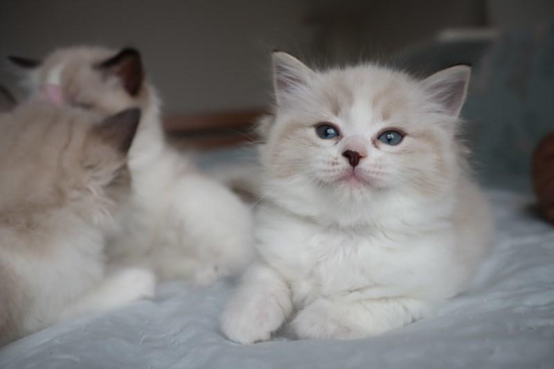 今日の子猫達 すっかり仲良しさん_a0285571_22463362.jpg
