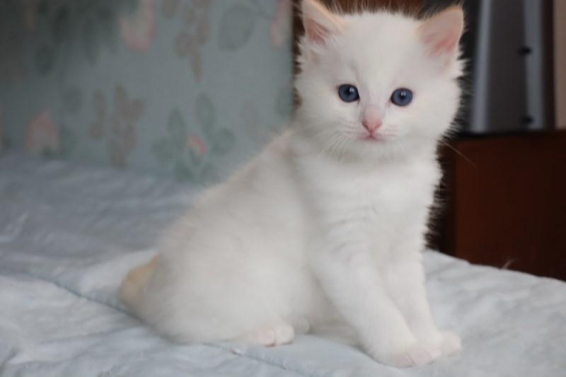 今日の子猫達 すっかり仲良しさん_a0285571_22463943.jpg