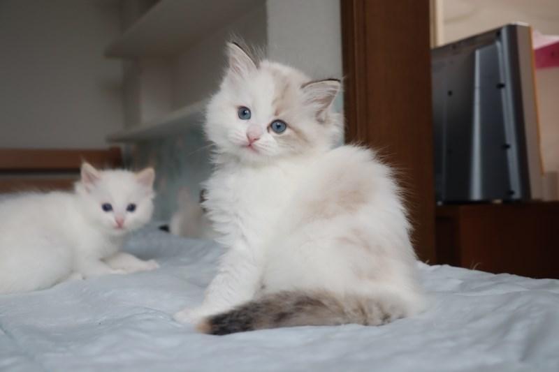 今日の子猫達 すっかり仲良しさん_a0285571_22464544.jpg
