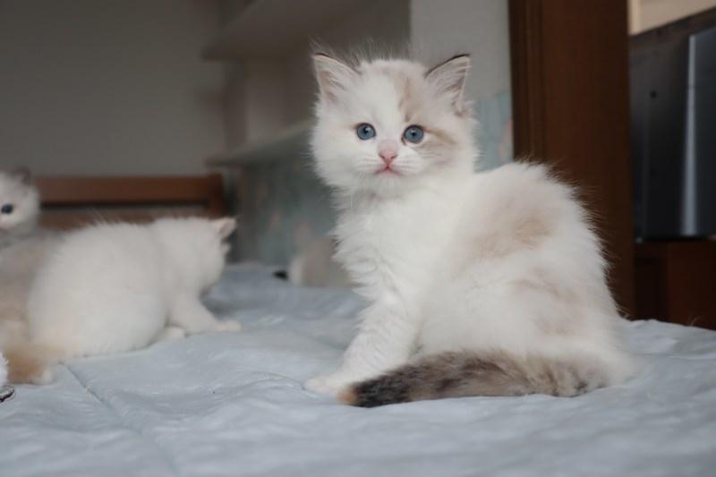 今日の子猫達 すっかり仲良しさん_a0285571_22465107.jpg