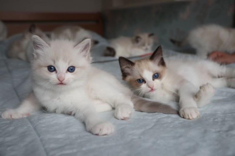 今日の子猫達 すっかり仲良しさん_a0285571_22465767.jpg