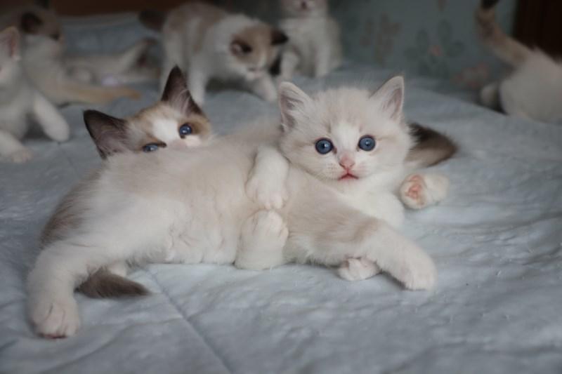 今日の子猫達 すっかり仲良しさん_a0285571_22470318.jpg