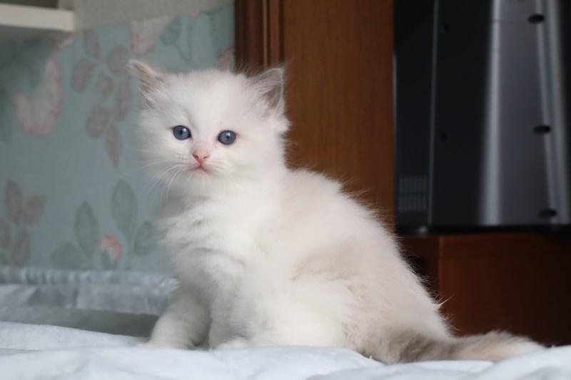 今日の子猫達 すっかり仲良しさん_a0285571_22471548.jpg