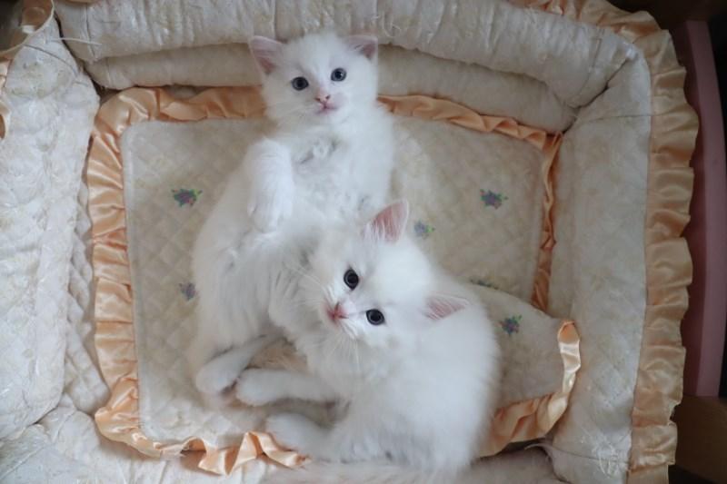 今日の子猫達 すっかり仲良しさん_a0285571_22472136.jpg