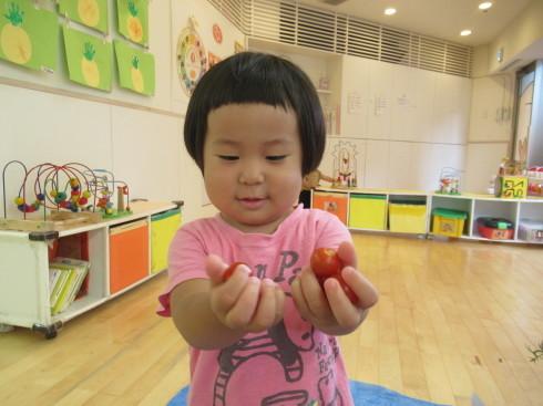 【南品川園】トマトの収穫をしたよ_a0267292_11170586.jpg