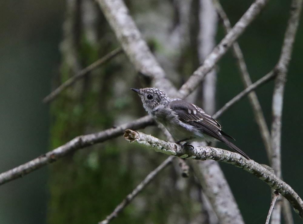 幼鳥たち、、その2,_f0305401_14015100.jpg