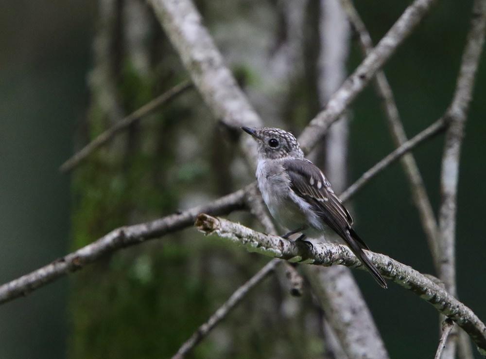 幼鳥たち、、その2,_f0305401_14020035.jpg