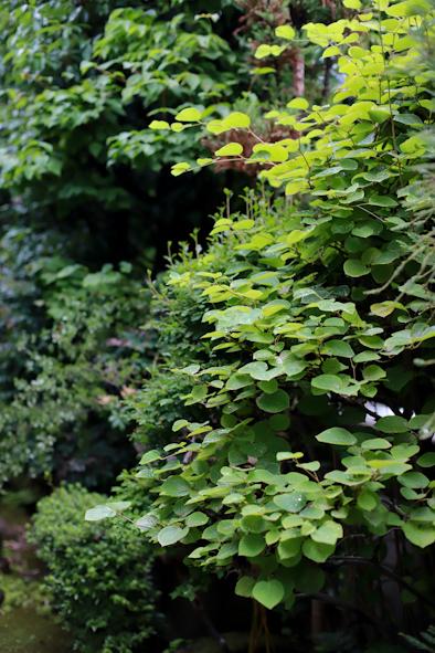 「お庭のグリーンでシャンペトルブーケレッスン2019夏」のご案内_b0208604_15175576.jpg