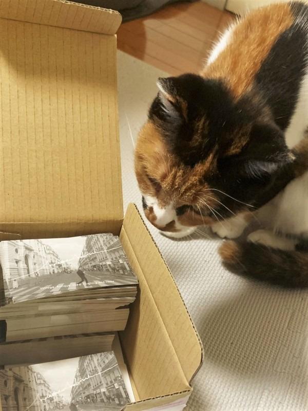 ショップカードが出来上がりました。と、ジンギスカン。入荷、プリントTシャツ色々_f0180307_19035153.jpg