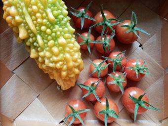 梅雨時にゴーヤをたくさん収穫できました。_c0195909_09234427.jpg