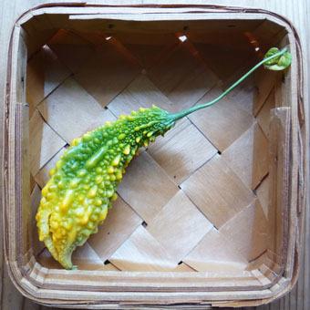 梅雨時にゴーヤをたくさん収穫できました。_c0195909_09241599.jpg