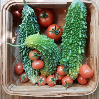 梅雨時にゴーヤをたくさん収穫できました。_c0195909_09243018.jpg