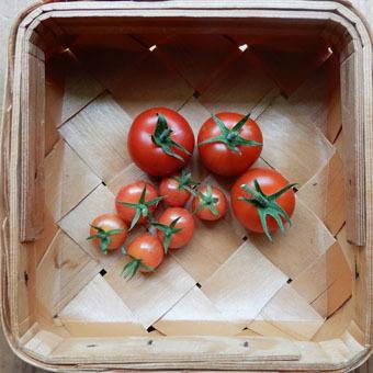 梅雨時にゴーヤをたくさん収穫できました。_c0195909_09243448.jpg
