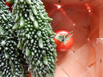 梅雨時にゴーヤをたくさん収穫できました。_c0195909_09243889.jpg