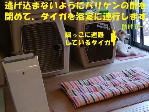 いきなり真夏がやって来た~(~_~;)_f0121712_15131029.jpg