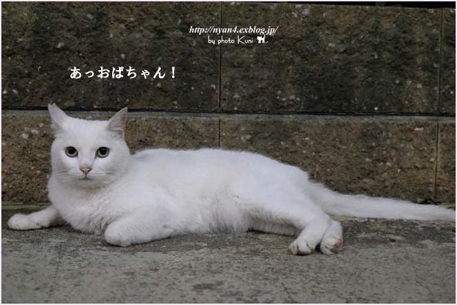 f0166234_01161189.jpg